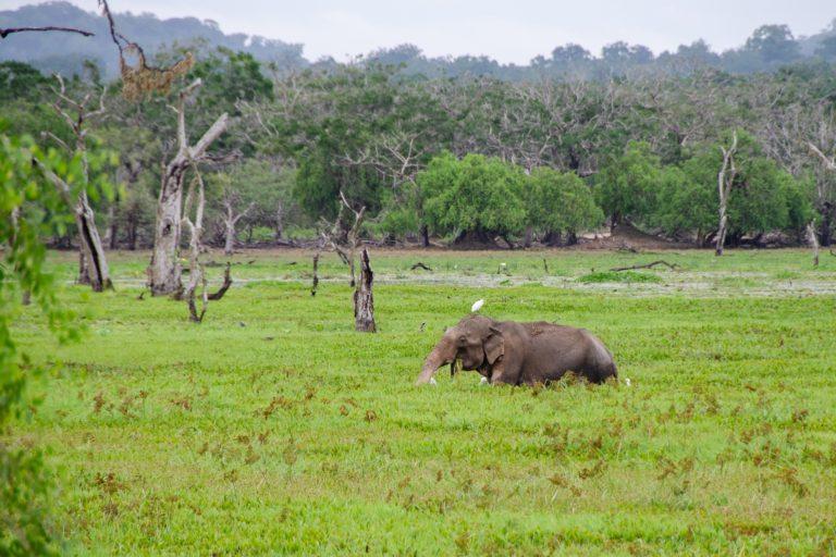 slon v trave